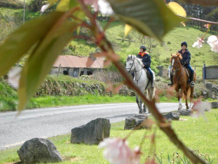 Horse Riding in Westport